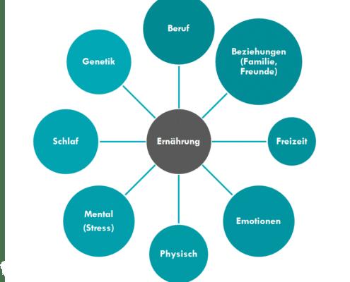 Grafik zeigt den Zusammenhang zwischen Ernährung und anderen Lebensbereichen. optimumtraining.at